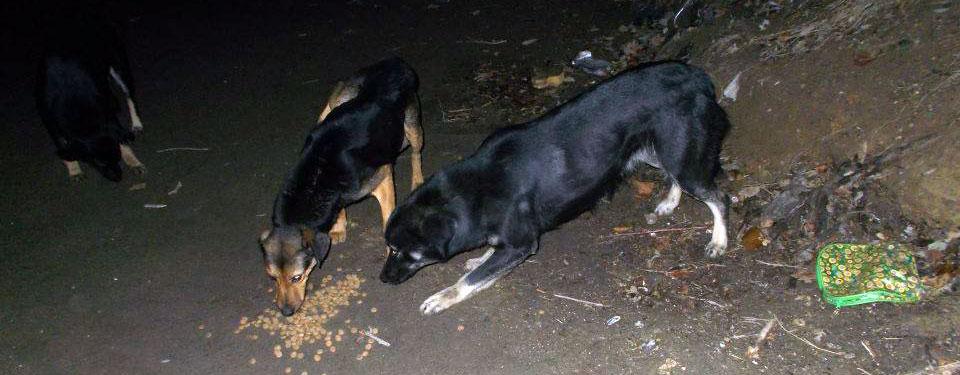 feedingdogs